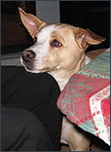 Casey, adopted from SPCA. Pet Concierge Tampa Bay