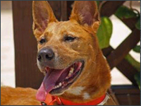 Lexie adopted from SPCA, Pet Concierge Tampa Bay